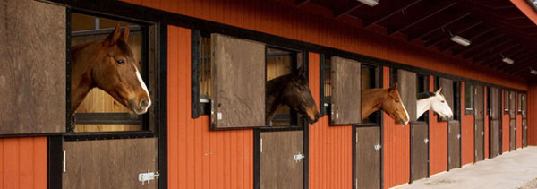 Building a Horse Stable
